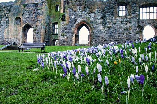 Spring, Flower, Spring Flowers, Castle, Newark, Arches