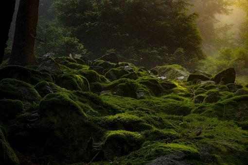 Forest, Dark, Moss, Nature, Gloomy, Darkness, Mysticism