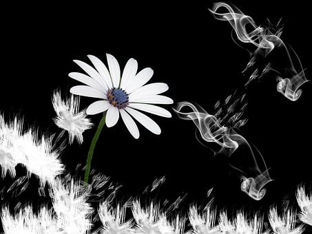 Flower, Lachine, Smoke, Design, Black, White, Fantasy