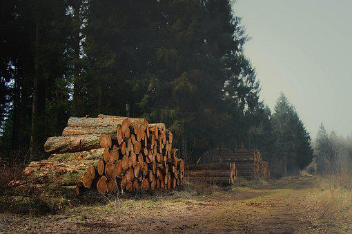 Lumber, Landscape, Wood, Nature, Pile, Forest, Tree
