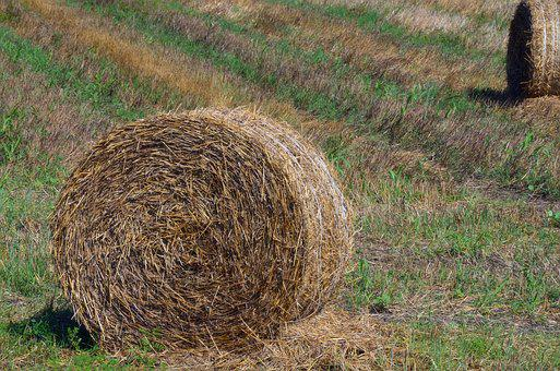 Straw, Bale, Harvest, Rural, Field, Agriculture, Nature