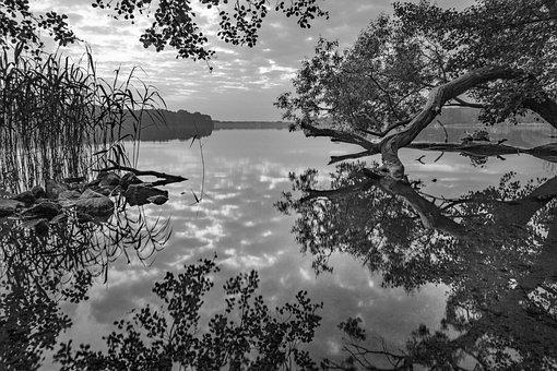 Lake, Idyll, Idyllic, Rest, Force, Bank, Water, Nature
