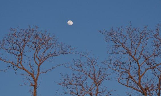 Moon, Trees, Sky, Light, Nature, Full, Moonlight