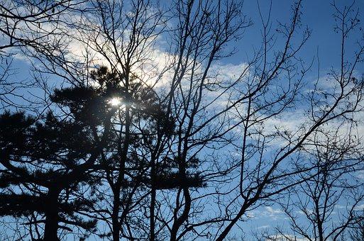 Sky, Tree, Nature, Blue, Landscape, Forest, Outdoor