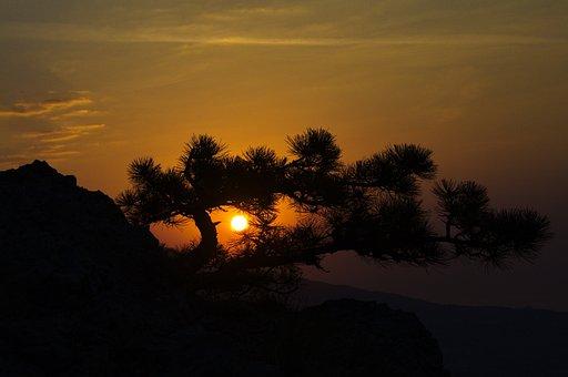 Crimea, Botkin Path, Dawn, Mountains, Pine, Morning