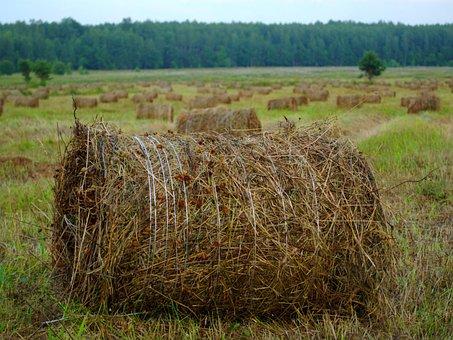Rick, Hay, Straw, Haymaking, Field, Village, Summer