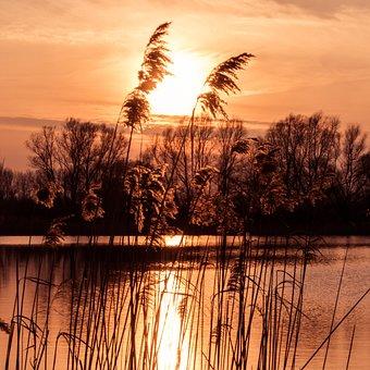 Sunset, Romantic, Grasses, Water, Dusk, Abendstimmung