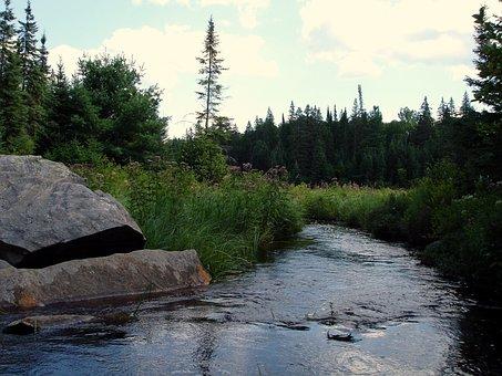 Bach, River, Water, Nature, Landscape, Flow, Mood