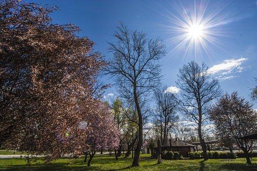Zagreb, Jarun Park, Bright, Sunny, Light, Nature, Sun