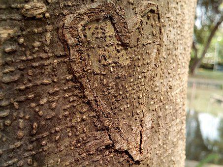 Heart, Tree, Bark, Wooden, Carving, Brown, Cute, Love
