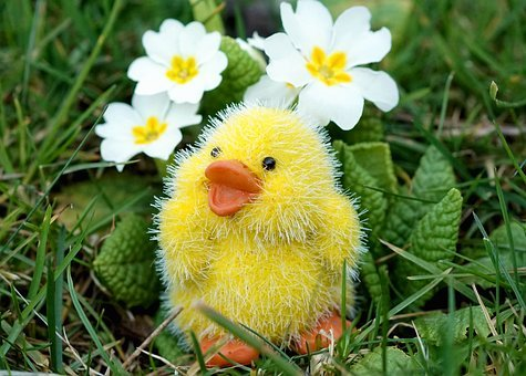 Easter, Chicks, Easter Decoration, Cute, Decoration