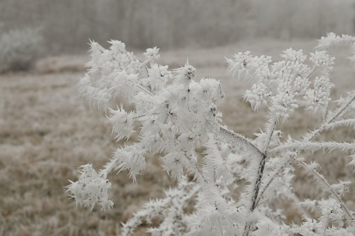 Winter, Wintry, Eiskristalle, Cold, Hoarfrost, Mood