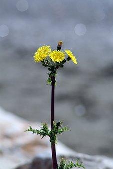 Flower, Nature, Flowers, Spring, Petals