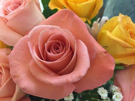 Rose, Bouquet, Love