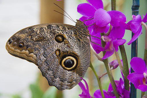 Butterfly, Wing, Flower, Insect, Nature, Summer, Spring