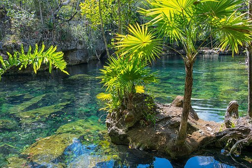 Mexico, Yucatan, Cenote, Nature, Summer, Travel