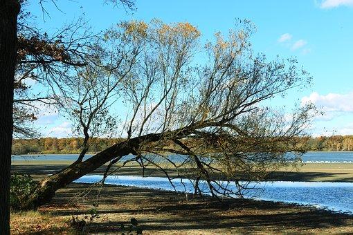 Bank, Pond, Tree, Kahl, Autumn, Nature, Log, Oblique