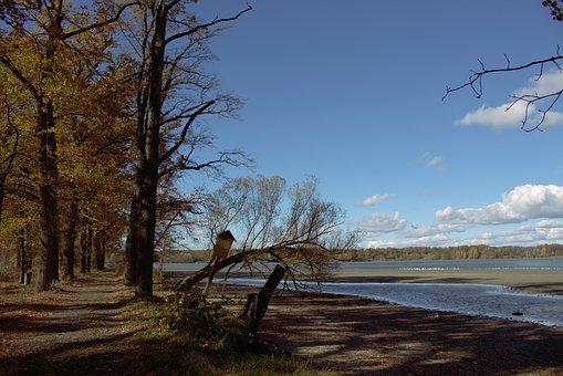Pond, Bank, Landscape, Away, Uferweg, Park, Walk