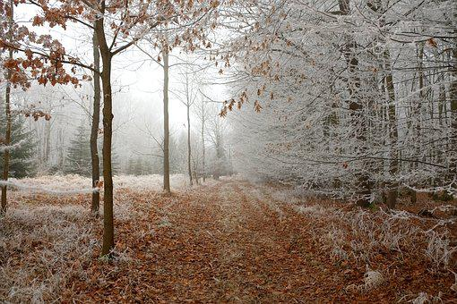 Forest Path, Winter, Forest, Away, Nature, Wintry