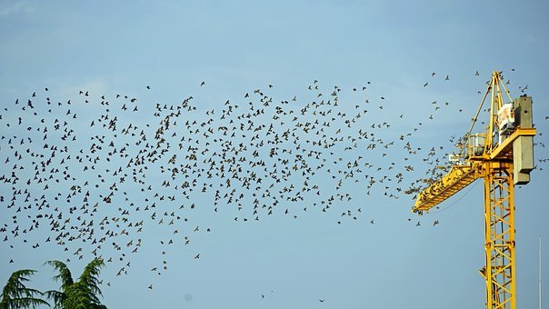 Flock Of Birds, Crane, Fly, Bird Migration