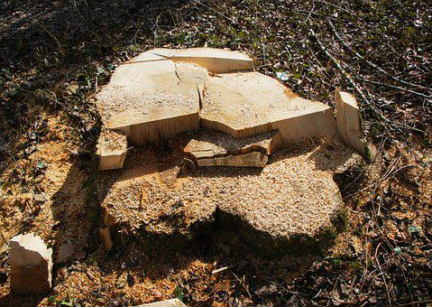 Sawed Off, Tree Stump, Like, Destroyed