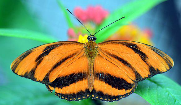 Butterfly, Tropical, Exotic, Animal, Nature, Insect