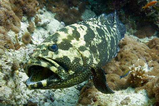 Fish, Sea, Diving, Undersea World, Underwater, Vacation