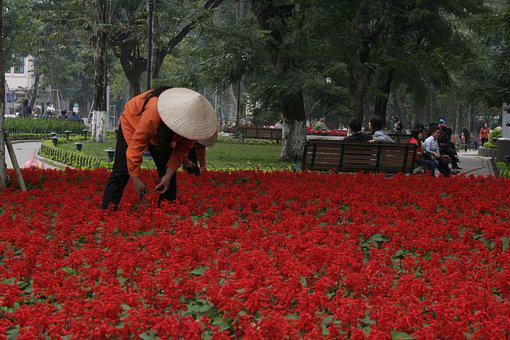 Vietnam, Flower Bed, Asian Hat