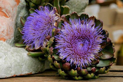 Flower, Vegetables, Artichoke, Purple, Blossom, Bloom
