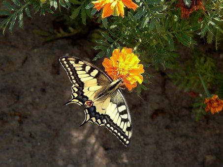 Butterfly, Flowers, Summer