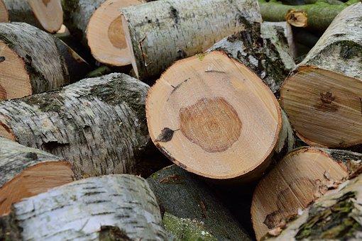Lumber, Birch, Holzstapel, Tree Trunks