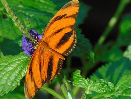 Butterfly, Leaf, Nature, Green, Brightly Colored, Wings