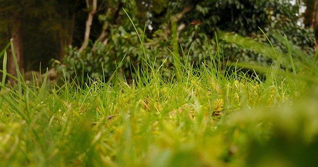 Grass, Green, Leaves, Green Grass, Outdoors, Foliage