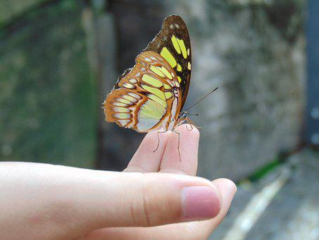 Butterfly, Hand, Nature, Wings