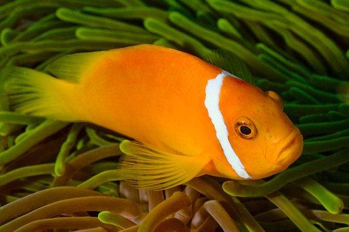 Fish, Ocean, Maldives, Underwater, Diving
