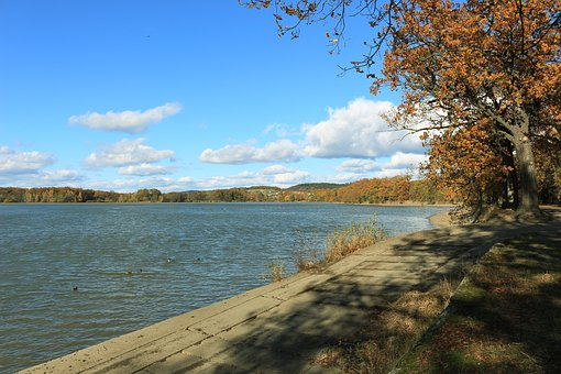 Bank, Trees, Walk, Autumn, Fall Leaves, Hiking, Nature