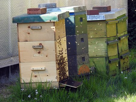 Beekeeper, Bees, Bee Hives, Bee Keeping, Honey Bees