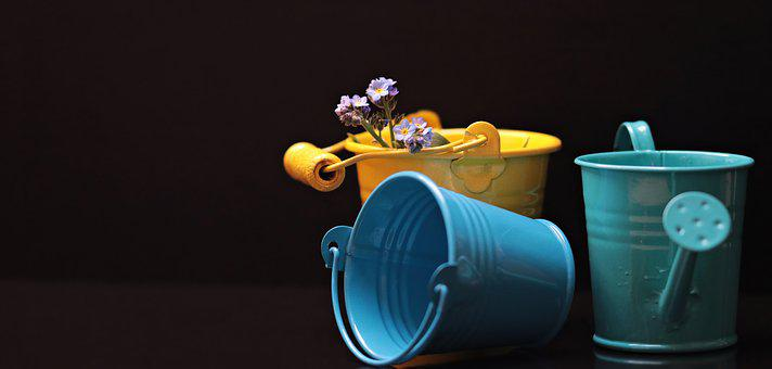 Bucket, Forget Me Not, Flower, Yellow, Blue, Petrol