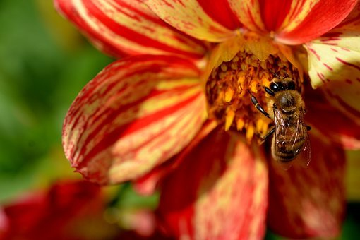 Bee, Flower, Busy, Garden, Insect, Summer, Plant