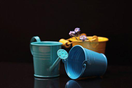 Bucket, Forget Me Not, Flower, Yellow, Blue