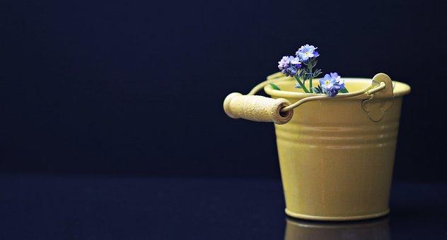 Bucket, Forget Me Not, Flower, Yellow, Yellow Bucket