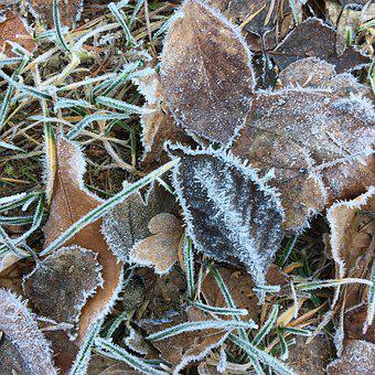 Frost, Hoarfrost, Cold, Winter, Leaves, Ground, Frozen