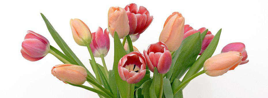 Tulips, Flowers, Apricot, Pink, Nature, Spring