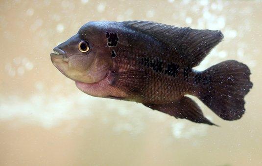 Over, Aquarium, Exotic Fish, Silver, Upset
