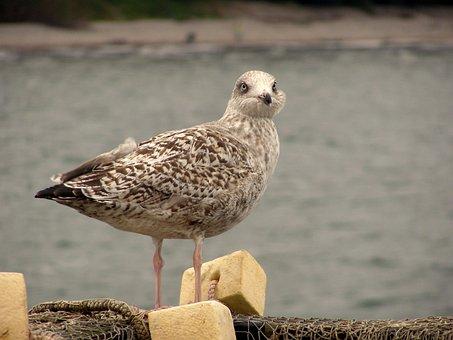 Seagull, Fishing Net, Fishing Boat, Baltic Sea, Sea