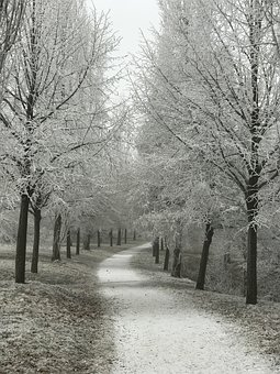 Away, Wintry, Trees, Hoarfrost, Odenwald, Bensheim