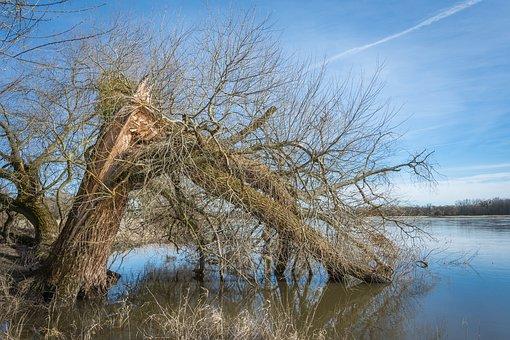 Elbe, Elbufer, River, Nature, Tree, Wood, Water