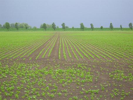 Arable Land, Diagonal Worth, Young Plantations