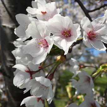 Blossoms, Spring, Nature, Bloom, Branch, Plant