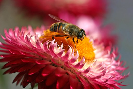 Hoverfly, Insect, Blossom, Bloom, Flower, Fly, Nectar